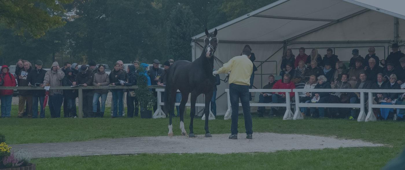 horse dressage uk