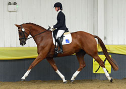 Image Result For Contact Us The British Hanoverian Horse Society