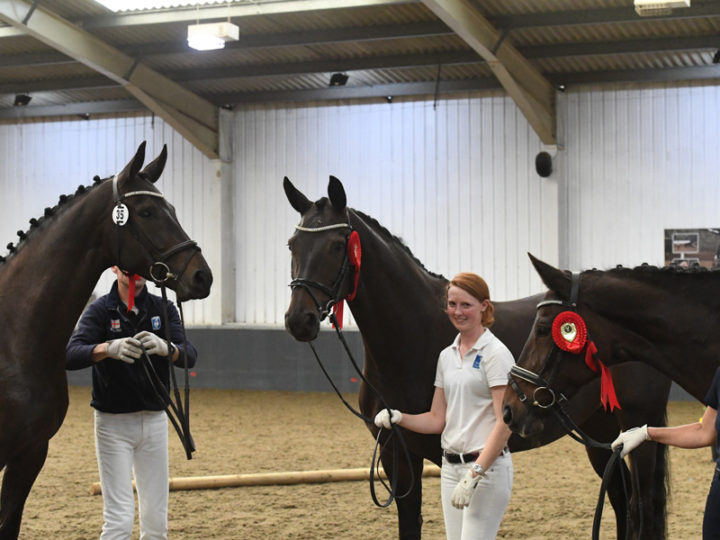 British Hanoverian Horse Society annual show